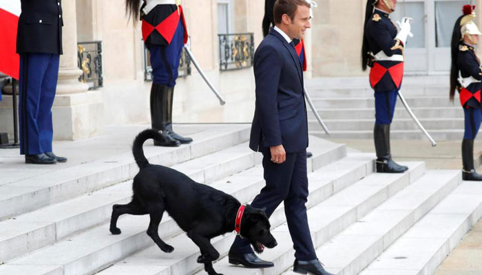 French President Emmanuel Macron's dog Nemo interrupts meeting, pees on fireplace – Watch