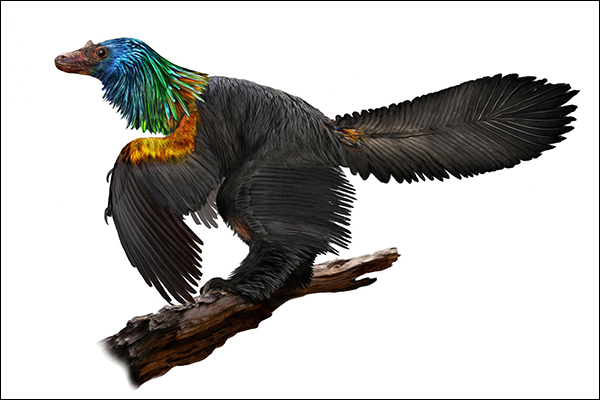 Diminutive dinosaur might have dazzled mates with rainbow ruff and a bony crest