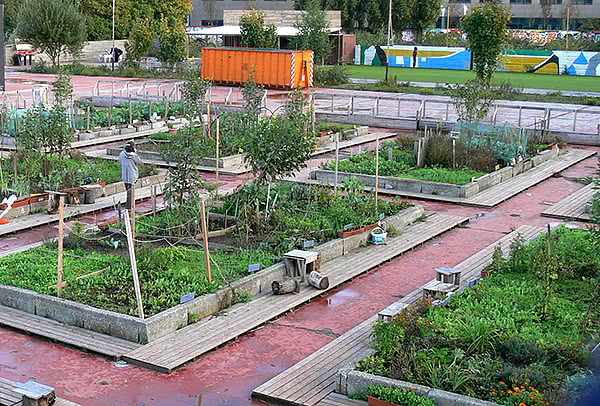 Researchers outline the interconnected benefits of urban agriculture