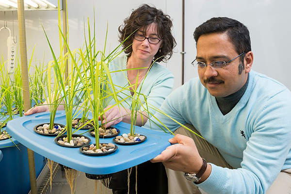 Biofungicide contains beneficial microbe to help plants fight fungal disease