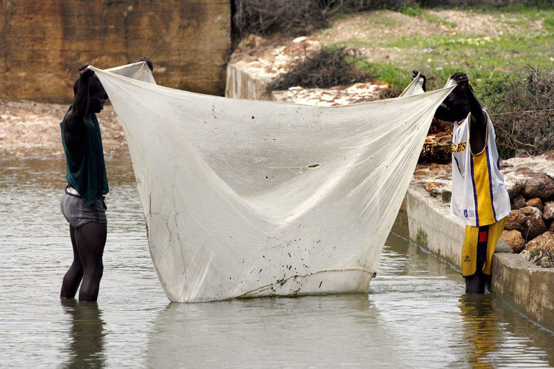 People are using mosquito nets for fishing and that's a bad idea