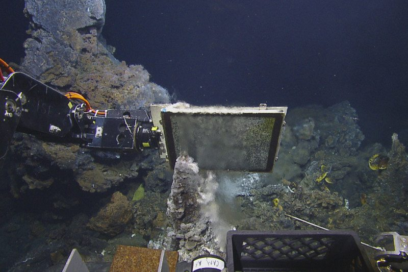 Deep-sea fish apply offspring near hydrothermal openings to keep one comfortable