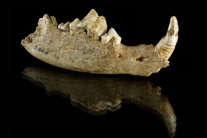 Earliest dog burial hints primeval human population adored dogs as dogs or cats