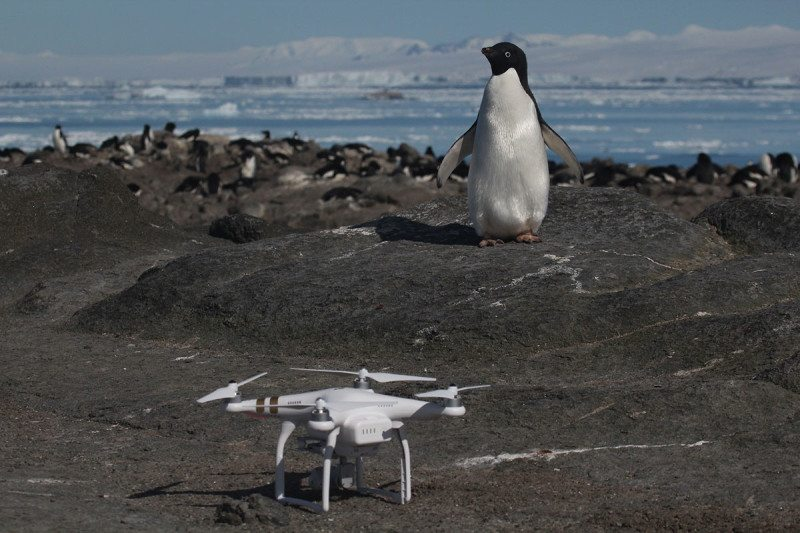 Drones reveal huge colonies of 1.5 million penguins on islands