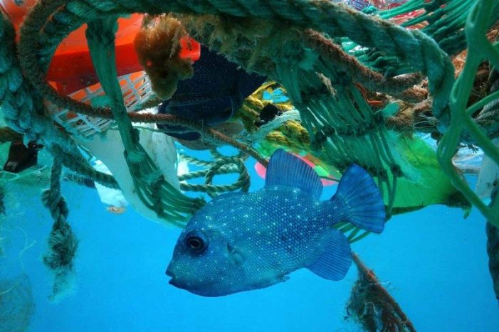 The Great Pacific Garbage Patch is gobbling up ever more plastic