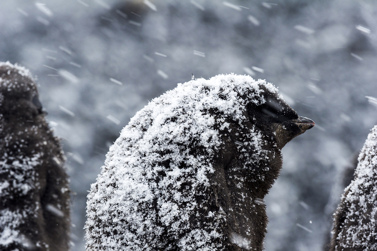 Antarctica still losing ice despite big rise in snowfall