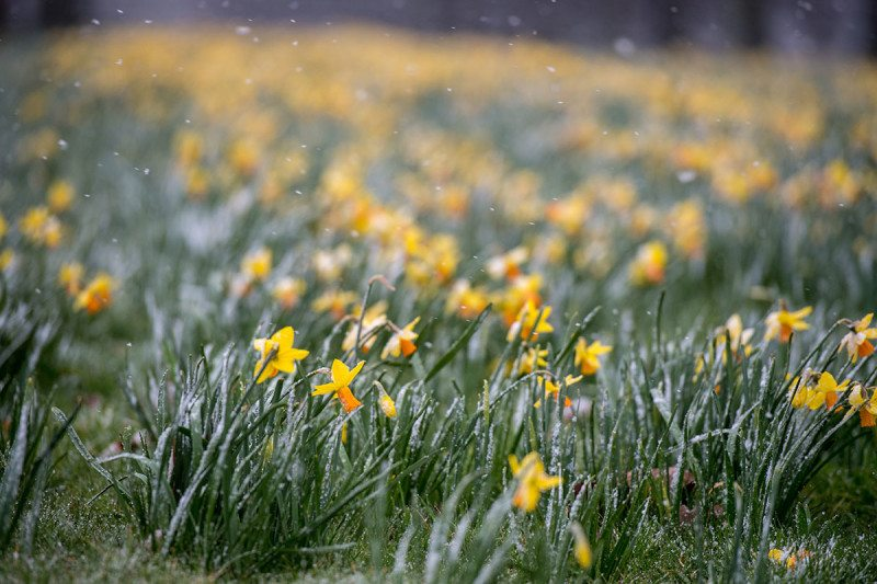 Most UK plants will flower at once in short 'condensed spring'