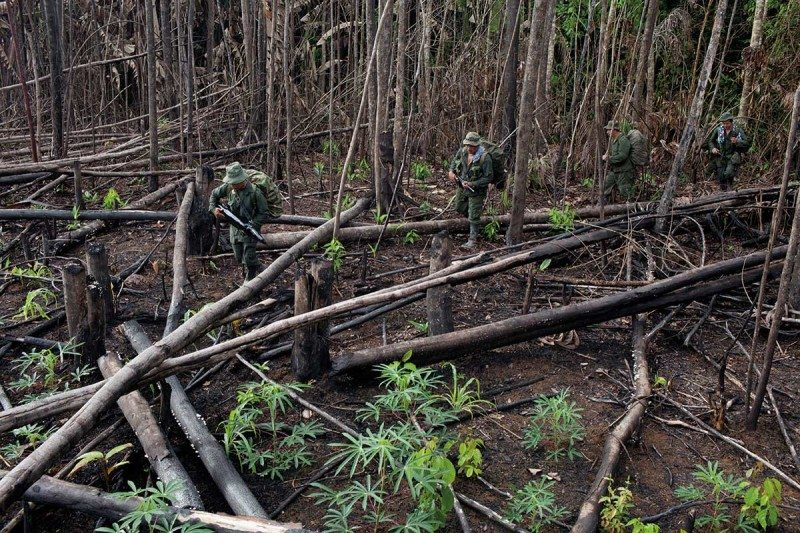 Colombia's peace deal unwittingly unleashed hell on the Amazon