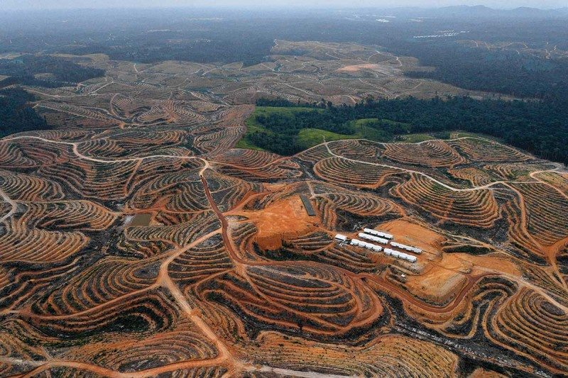 The real palm oil problem: it's not just in your food