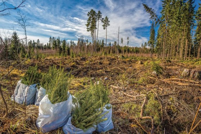 Rich nations restore their own forests but trash those elsewhere