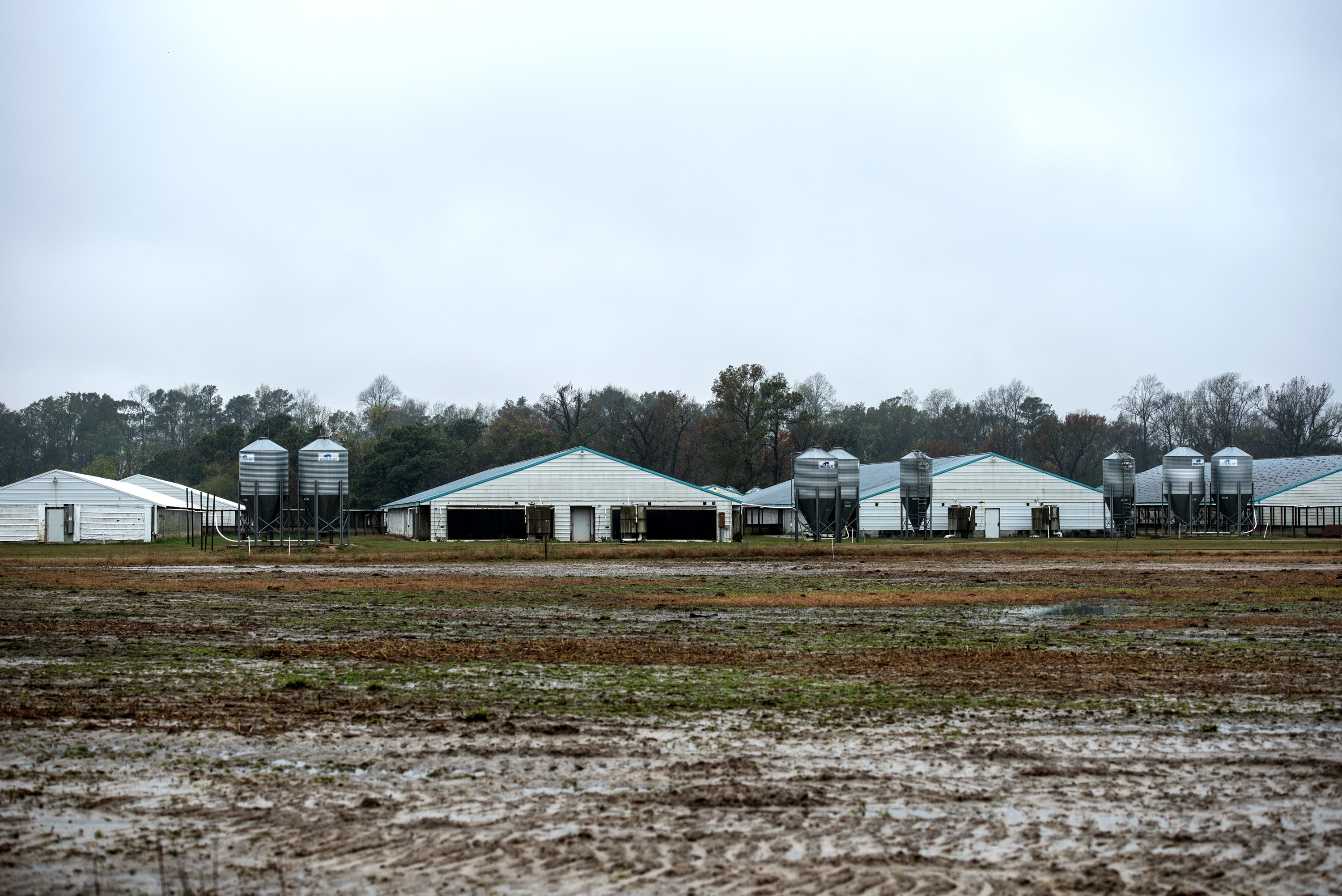 A swine facility from Smithfield owned hogs in Eastern North Carolina.
